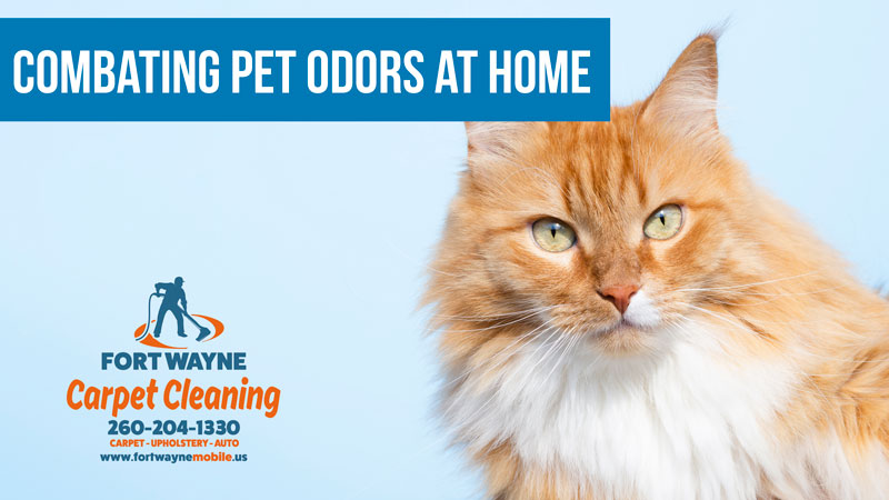 Pet Odors Smells Carpet Cleaning